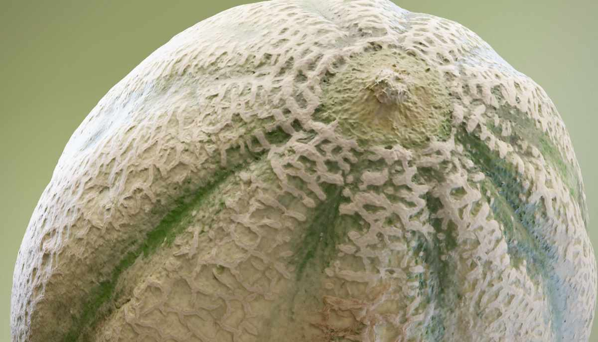 Close up of a 3D scanned melon